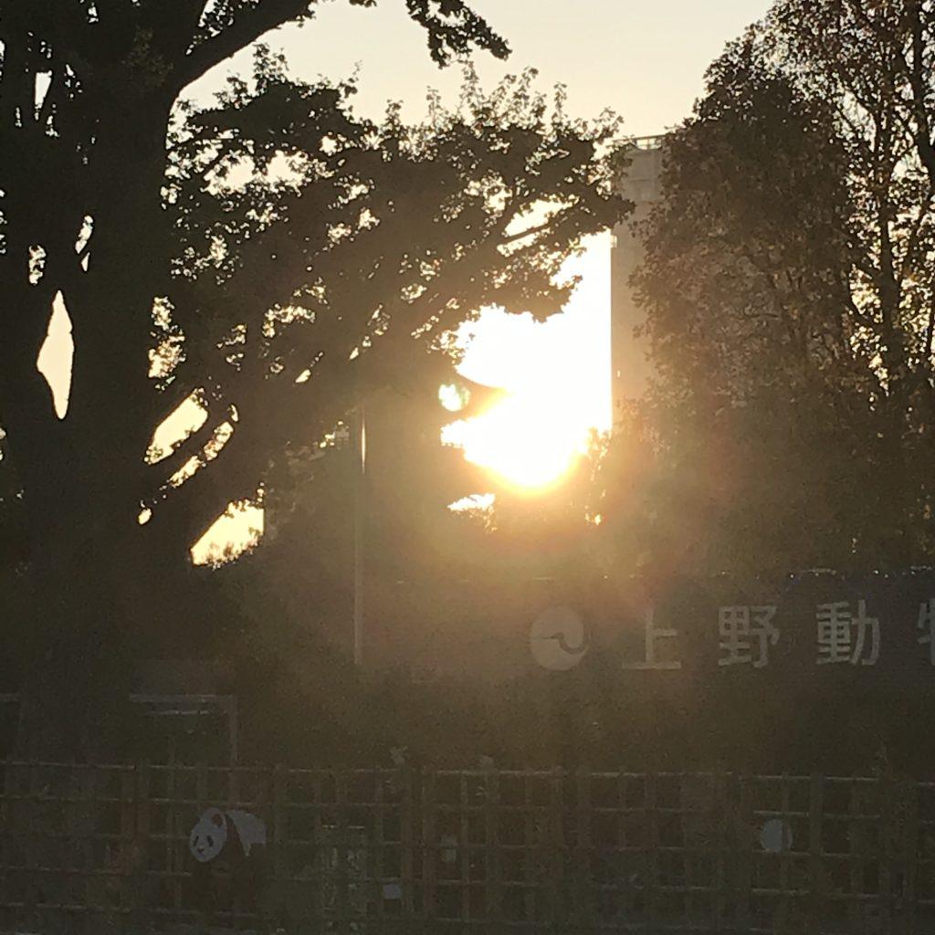 上野の夕日